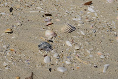 Shells at the bottom. Of the dried-up Aral Sea Royalty Free Stock Images