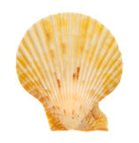 Shells. With bright colors on the white background Stock Photo