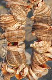 Shells. Broken shells in sunset light Royalty Free Stock Photos