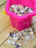 The shells into a bucket. Stock Image