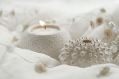 Shells candles stock images