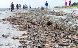 Shells on Captiva Island, Florida Royalty Free Stock Images