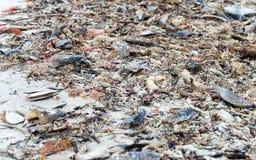 Shells on Captiva Island, Florida Royalty Free Stock Image