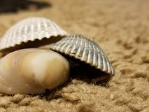 Shells on carpet stock image