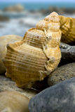 Shells in close-up. Royalty Free Stock Images