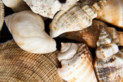 Shells close up Royalty Free Stock Photography