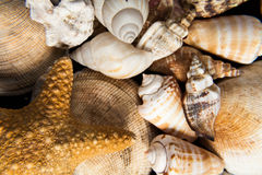 Shells close up Stock Images