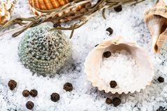 Shells, coarse grained Sea Salt and peppercorns. Close up stock photography
