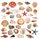 Shells collection Stock Images