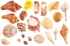 Shells collection Royalty Free Stock Photography