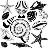Shells collection. Vector set with seashells and starfish Stock Photos