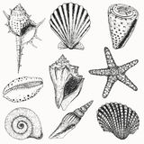 Shell set royalty free stock photography