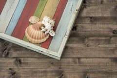 Shells on the coloured plank. Shells in the tray on the wooden  plank Stock Photos