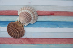 Shells on the coloured plank. Shells on the wooden colored plank Royalty Free Stock Image