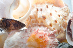 Shells composition in aquarium Royalty Free Stock Images