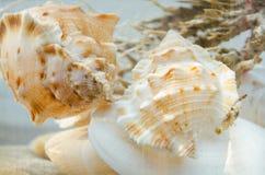 Shells composition in aquarium Stock Photos