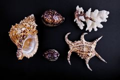 Shells and coral Stock Image