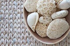 Shells and coral. Shells , seaweed and coral in a bowl royalty free stock images
