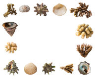Shells and corals frame Stock Photos