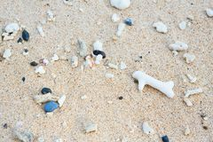 Shells and corals in sand Royalty Free Stock Photography