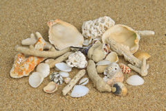Shells and corals on the sand. Shells and corals on the yellow sand Royalty Free Stock Images