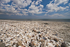 Shells on Corbu Beach Royalty Free Stock Photos
