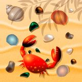 Shells, crab and sea colored pebbles on sand background. Vector illustration Stock Images