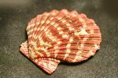 Decorative shells of sea creatures royalty free stock photos