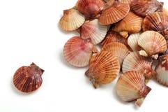 Shells der Pilgerer Lizenzfreies Stockbild