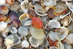 Background with colored shells Stock Photo