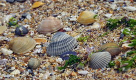 Colored shells on the beach Stock Image