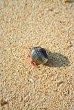 Shells, die auf den Strandsand gehen Stockbilder