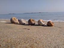 5 shells die op het overzees letten Stock Fotografie