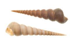 Shells die op wit wordt geïsoleerdk Royalty-vrije Stock Fotografie