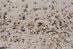 Shells die over Sandy Beach wordt verspreid royalty-vrije stock foto
