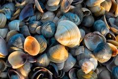Shells door de zon wordt verlicht die royalty-vrije stock foto's