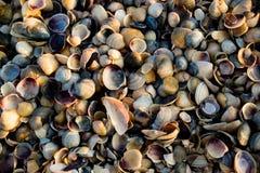 Shells door de zon wordt verlicht die royalty-vrije stock foto