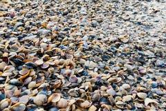 Shells door de zon wordt verlicht die stock foto's