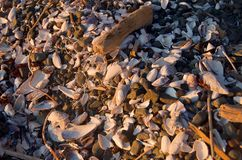 Shells and driftwood on beach in warm light of setting sun. Spring Island, British Columbia stock photos