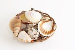 Shells in een mand Royalty-vrije Stock Foto's
