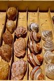 Shells in een vertoningsdoos Royalty-vrije Stock Foto