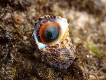 Shells einer Spirale Lizenzfreie Stockfotos
