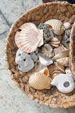 Shells. Empty sea shells and snails in basket Royalty Free Stock Image