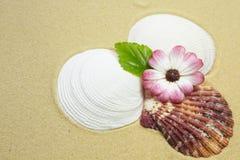 Shells en bloem op een zandig strand Stock Afbeeldingen