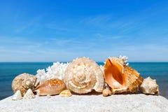 Shells en koralen die op de witte steen op een achtergrond van blauwe hemel en overzees liggen Royalty-vrije Stock Foto's