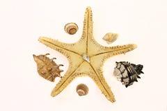 Shells en Overzeese Ster Stock Afbeeldingen
