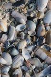 Shells en scheermessenbladen op het strand langs de kust van de Noordzee in Katwijk, Nederland Royalty-vrije Stock Foto's