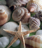 Shells en stenen Stock Afbeeldingen