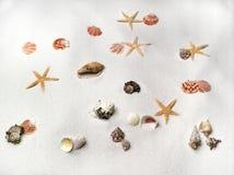 Shells en sterren Royalty-vrije Stock Foto
