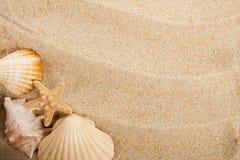 Shells en zand royalty-vrije stock afbeeldingen